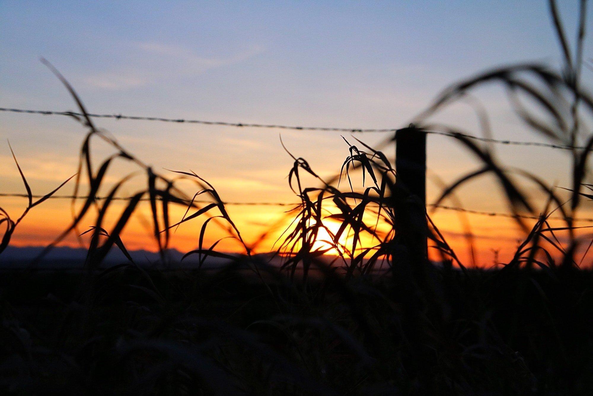 Sunset in Alberta Canada
